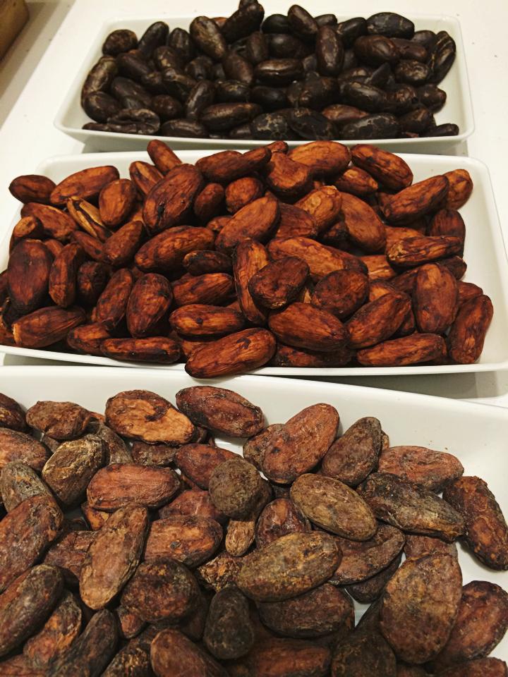Semilas de cacao