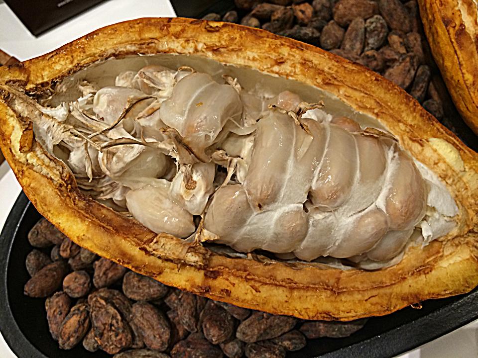 Vaina cacao