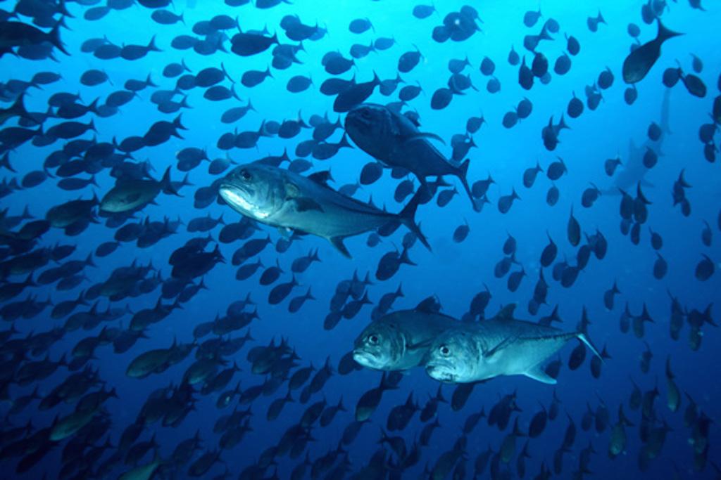 Pesca sostenible Mercado de Marisco Panamá